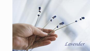 29126_lavender.jpg